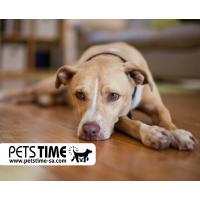 أعراض تسمم الكلاب وعلاجها